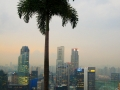 palm-in-skypark.jpg